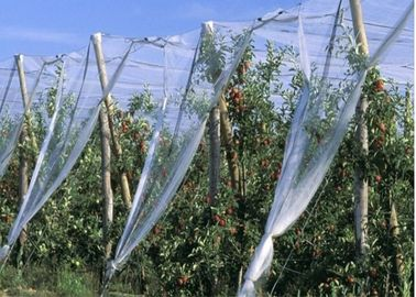 China HDPE Single Filament Insect Mesh Netting For Nursery Pots Size Customized supplier