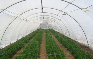 High Performance Greenhouses Insect Mesh Netting 48% Porosity Easy Installation