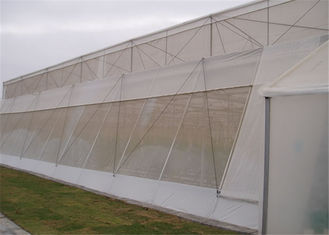 China Anti-Insect, Anti -Hail Mesh Netting, Agriculture, Crop Cover Netting, Fruit Tree Cover, Greenhouse Cover Nets supplier