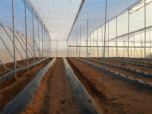 China 250 Meters Insect Screen Mesh ,100% HDPE Greenhouse Insect Protection Netting supplier