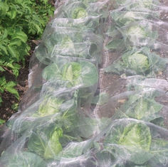 Agricultural Garden White Fly Screen Netting Anti Aphid Insect For Cabbage