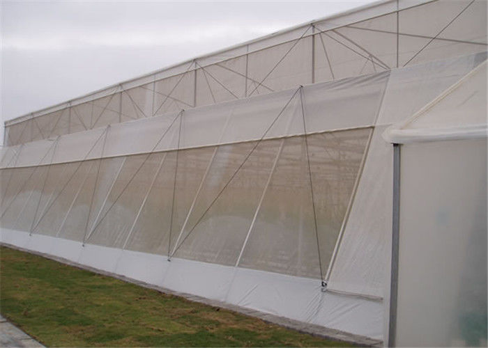 Anti Insect Anti Hail Mesh Netting Agriculture Crop