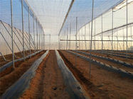250 Meters Insect Screen Mesh ,100% HDPE Greenhouse Insect Protection Netting