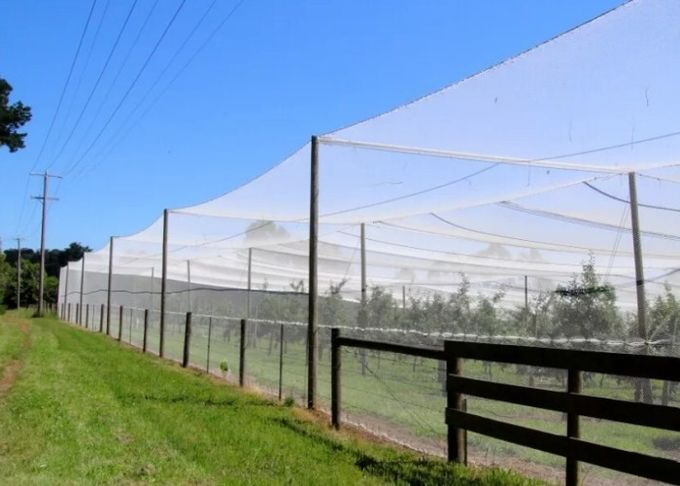 Agricultural Insect Mesh Protection Netting , Insect Fly Screen Mesh